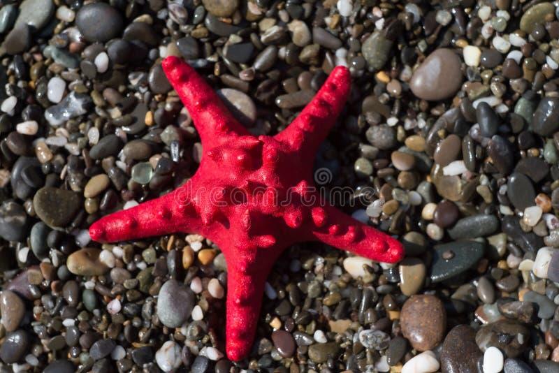 Κόκκινος αστερίας στο αμμοχάλικο, ακτή Θαλάσσια ζωή στοκ φωτογραφία με δικαίωμα ελεύθερης χρήσης