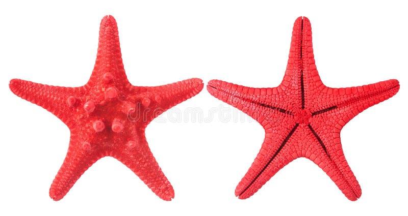 κόκκινος αστερίας στοκ φωτογραφίες