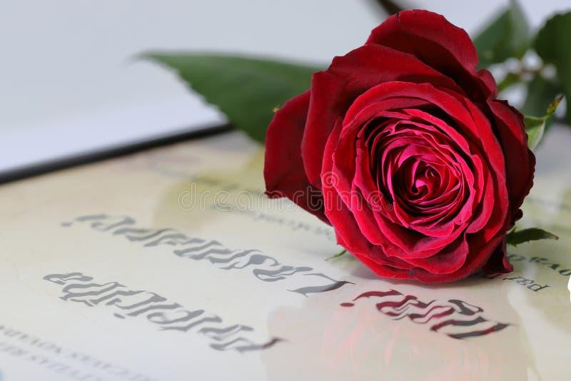 Κόκκινος αυξήθηκε λουλούδι στην επιστολή στοκ εικόνα με δικαίωμα ελεύθερης χρήσης