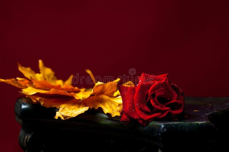 Κόκκινος αυξήθηκε στα κίτρινα φύλλα στοκ εικόνες