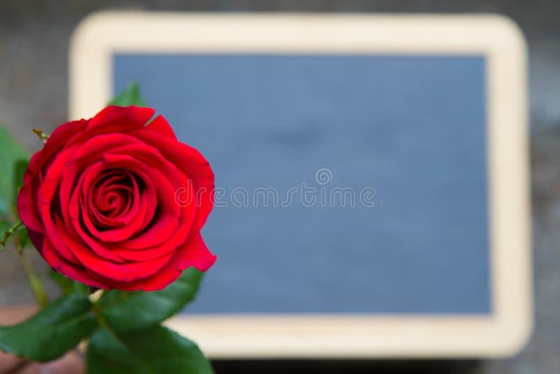 Κόκκινος αυξήθηκε στον πίνακα στοκ εικόνες με δικαίωμα ελεύθερης χρήσης
