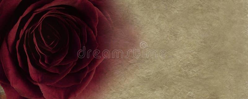 Κόκκινος αυξήθηκε στο υπόβαθρο περγαμηνής στοκ εικόνα με δικαίωμα ελεύθερης χρήσης