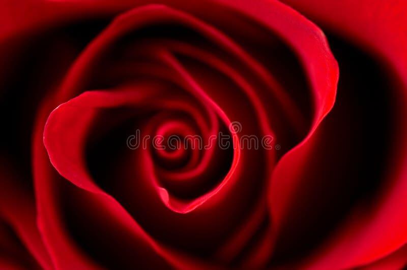 κόκκινος αυξήθηκε στοκ εικόνες με δικαίωμα ελεύθερης χρήσης