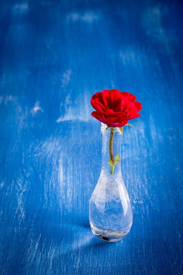 Κόκκινος αυξήθηκε vase γυαλιού στοκ εικόνες