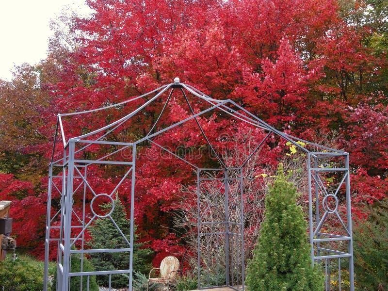 Κόκκινος κήπος παγοδών δέντρων σφενδάμνου στοκ εικόνες