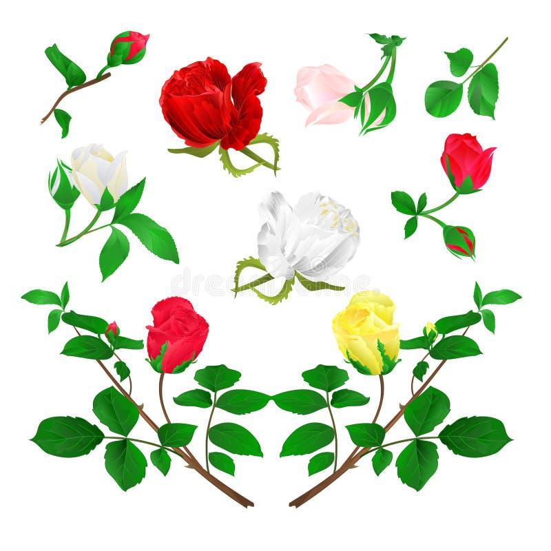 Κόκκινος κίτρινος άσπρος μίσχος μπουμπουκιών τριαντάφυλλου με τα φύλλα και τα άνθη σε μια άσπρη εκλεκτής ποιότητας διανυσματική α απεικόνιση αποθεμάτων