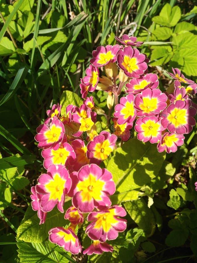 κόκκινος κίτρινος λουλ πράσινα φύλλα στοκ εικόνες