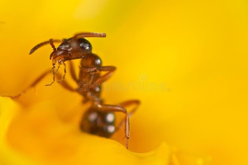 κόκκινος κίτρινος λουλ στοκ φωτογραφίες