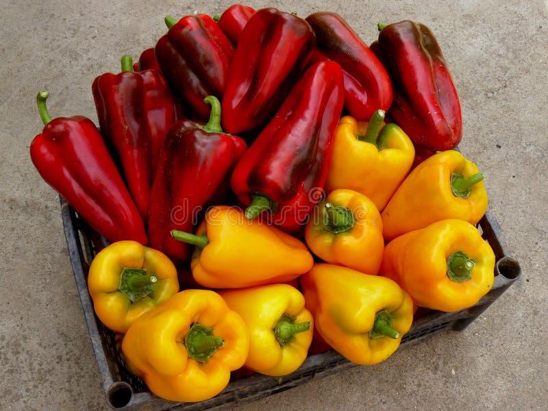 κόκκινος κίτρινος πιπεριών στοκ φωτογραφία με δικαίωμα ελεύθερης χρήσης
