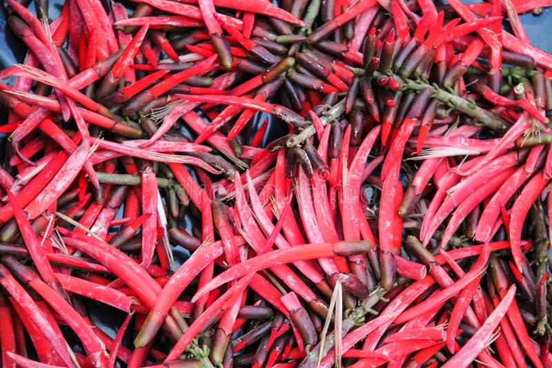 Κόκκινος - καυτά μεξικάνικα πιπέρια τσίλι στο στάβλο αγοράς στοκ εικόνες