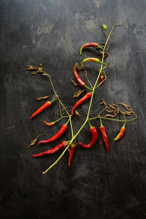 Κόκκινος - καυτός θάμνος πιπεριών τσίλι στο παλαιό ξύλινο μαύρο υπόβαθ στοκ φωτογραφία με δικαίωμα ελεύθερης χρήσης