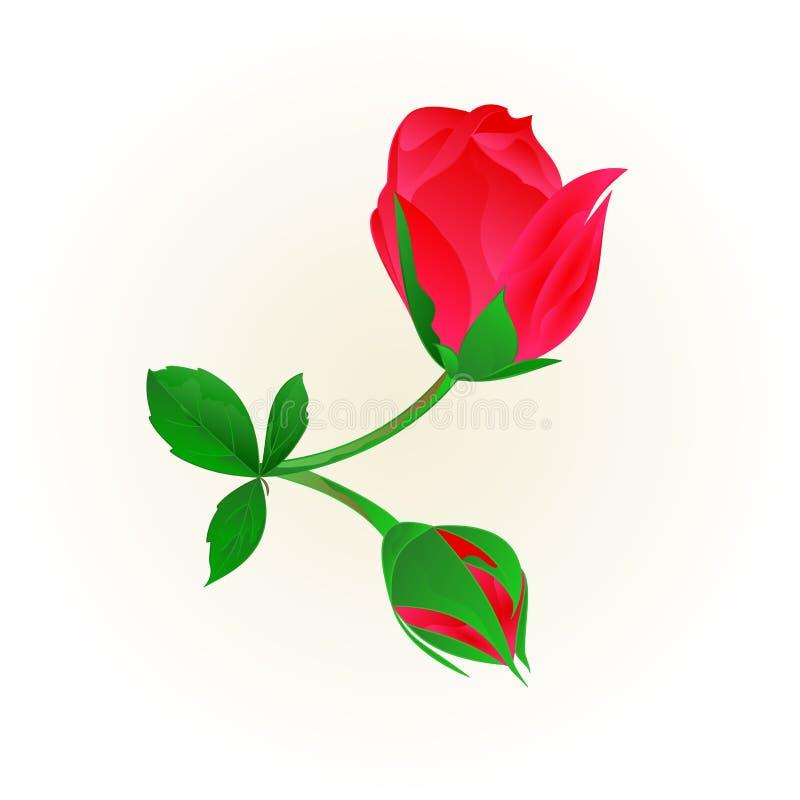 Κόκκινος μίσχος μπουμπουκιών τριαντάφυλλου με την εκλεκτής ποιότητας διανυσματική απεικόνιση φύλλων και ανθών ελεύθερη απεικόνιση δικαιώματος