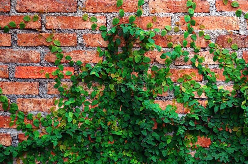 κόκκινος τοίχος πράσινων &ph στοκ φωτογραφία με δικαίωμα ελεύθερης χρήσης