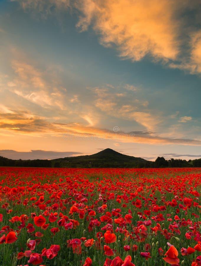 Κόκκινος τομέας παπαρουνών με τα σύννεφα στοκ φωτογραφία με δικαίωμα ελεύθερης χρήσης