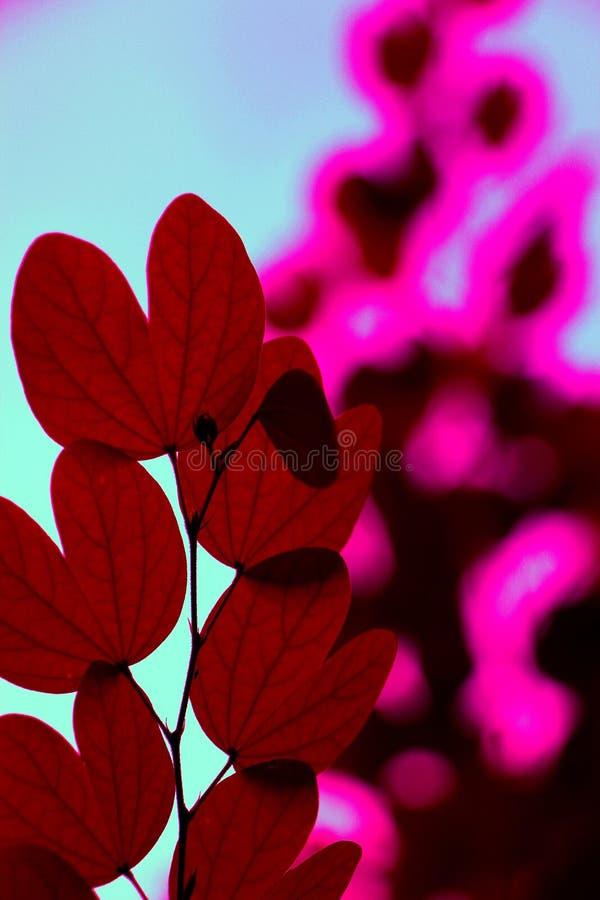 Κόκκινος στοκ εικόνες