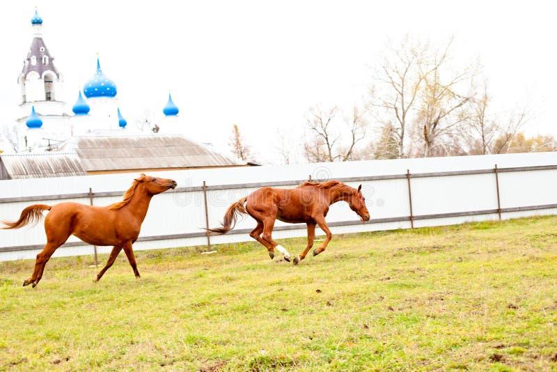Κόκκινο άλογο τρεξίματος στοκ φωτογραφίες με δικαίωμα ελεύθερης χρήσης