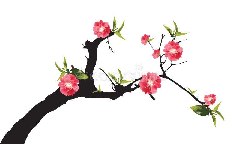 Κόκκινο άνθος κερασιών δέντρων sakura πλήρους άνθισης στο λευκό ελεύθερη απεικόνιση δικαιώματος