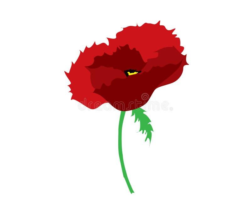 Κόκκινο απλό ενιαίο λουλούδι παπαρουνών στοκ φωτογραφίες με δικαίωμα ελεύθερης χρήσης