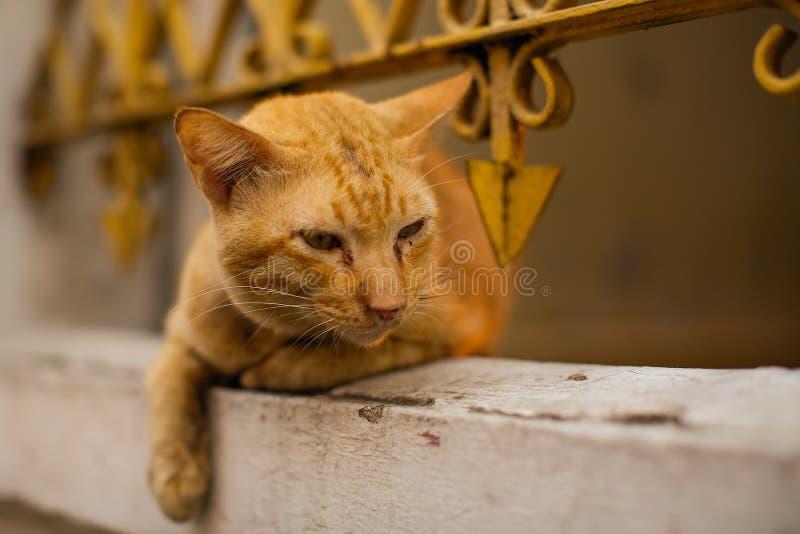 Κόκκινο γατών που βρίσκεται από το φράκτη σιδήρου στοκ φωτογραφία με δικαίωμα ελεύθερης χρήσης