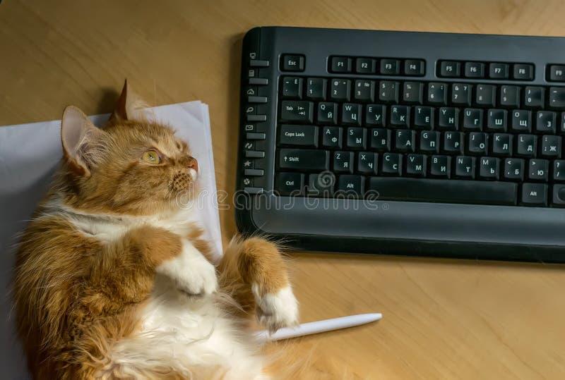 Κόκκινο γούνινο pussycat που βρίσκεται κοντά στο πληκτρολόγιο στον πίνακα στοκ εικόνα με δικαίωμα ελεύθερης χρήσης