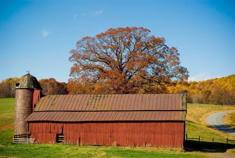κόκκινο δέντρο σιταποθη&kappa στοκ εικόνες με δικαίωμα ελεύθερης χρήσης