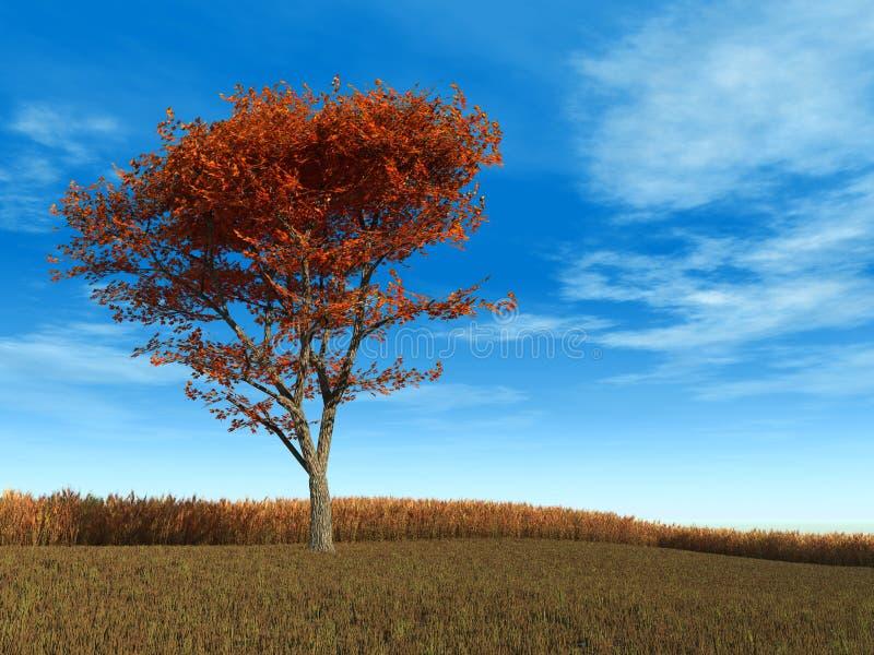 κόκκινο δέντρο σφενδάμνο&upsil διανυσματική απεικόνιση
