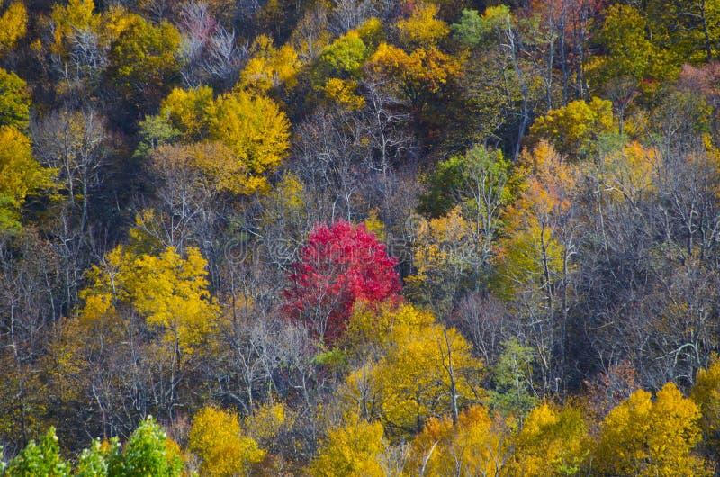 Κόκκινο δέντρο το φθινόπωρο στο Drive οριζόντων στοκ εικόνες με δικαίωμα ελεύθερης χρήσης