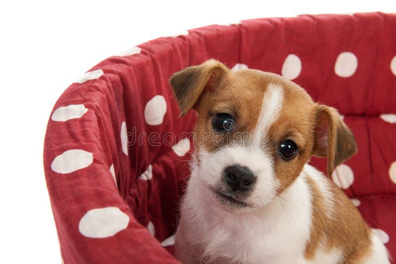 Κόκκινο επισημασμένο κρεβάτι κατοικίδιων ζώων με λίγο κουτάβι στοκ εικόνες
