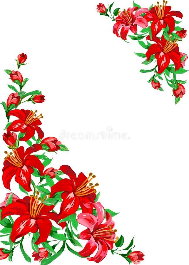 κόκκινο λευκό κρίνων ανα&sigma διανυσματική απεικόνιση