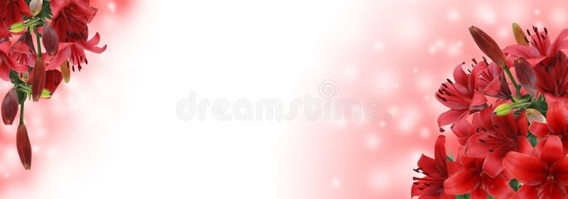 κόκκινο λευκό κρίνων ανα&sigma στοκ φωτογραφίες με δικαίωμα ελεύθερης χρήσης