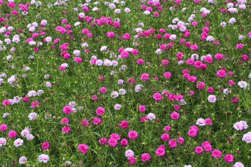 Κόκκινο λιβάδι λουλουδιών στοκ φωτογραφία