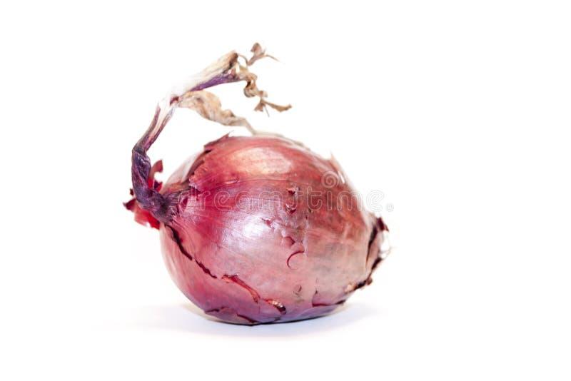 Κόκκινο κρεμμύδι απομονωμένο σε λευκό φόντο - φωτογραφία στοκ εικόνες με δικαίωμα ελεύθερης χρήσης