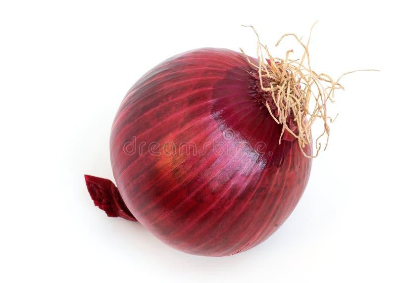 Κόκκινο κρεμμύδι στοκ εικόνες
