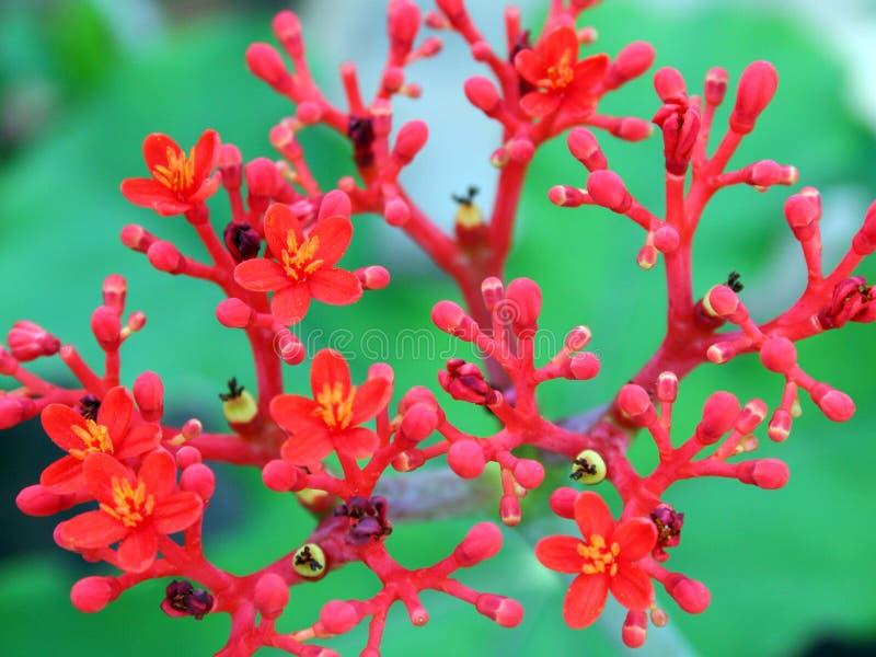 Download κόκκινο λουλουδιών άνθ&iota Στοκ Εικόνα - εικόνα από ανθίζοντας, πάρκα: 388145