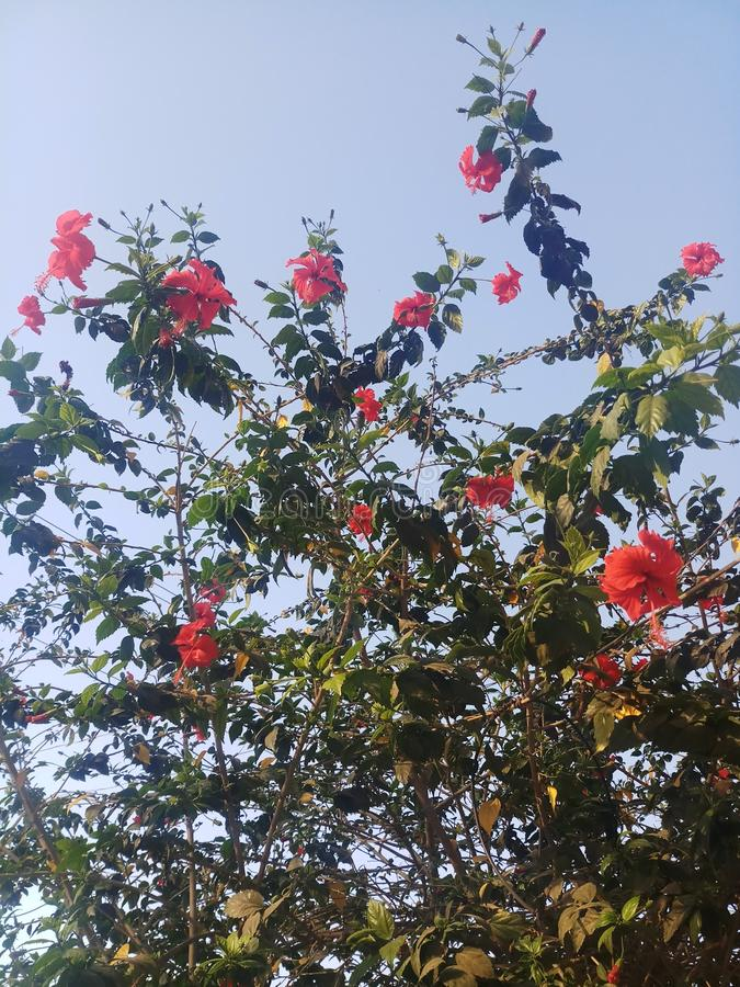 Κόκκινο λουλούδι στο δέντρο στοκ εικόνες με δικαίωμα ελεύθερης χρήσης