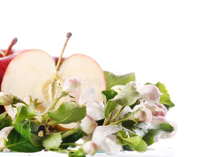 Download κόκκινο μήλων στοκ εικόνα. εικόνα από φρεσκάδα, τρόφιμα - 13186705