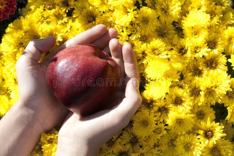 Κόκκινο μήλο στα χέρια του παιδιού στο υπόβαθρο λουλουδιών στοκ φωτογραφίες με δικαίωμα ελεύθερης χρήσης