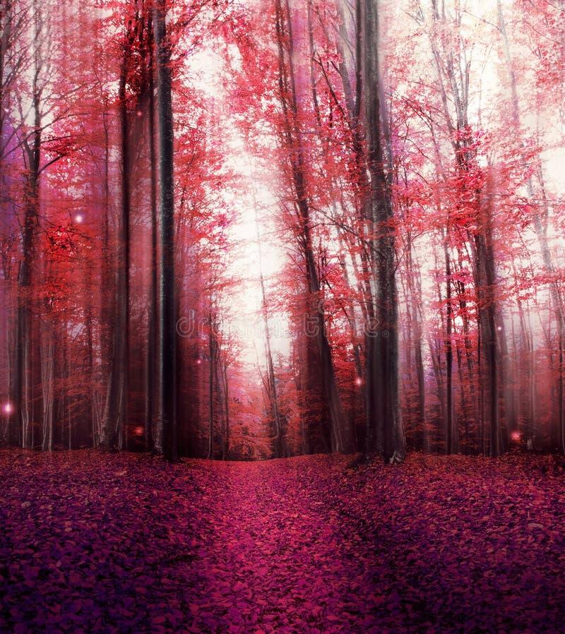 Κόκκινο μαγικό δάσος της Misty με τα μυστήρια φω'τα στοκ εικόνα
