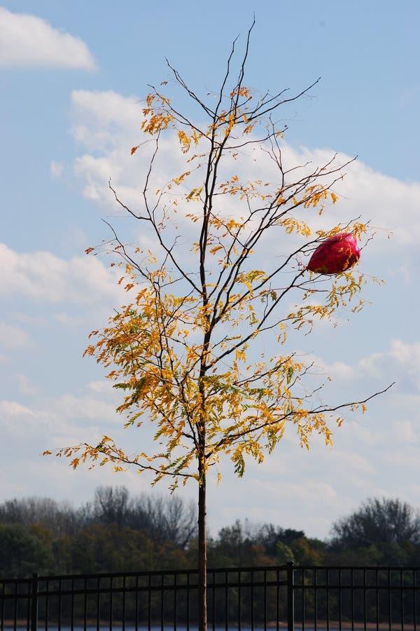 Κόκκινο μπαλόνι στοκ εικόνα με δικαίωμα ελεύθερης χρήσης
