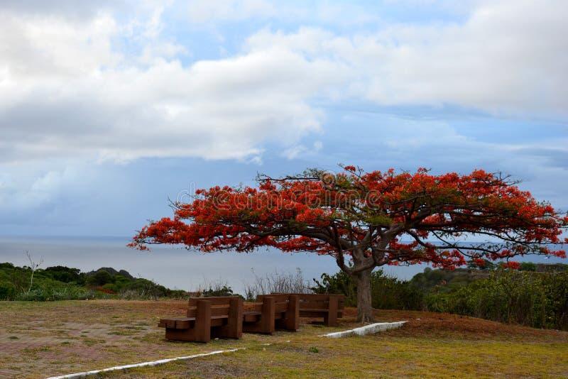 Κόκκινο λουλουδιών δέντρων whith στοκ φωτογραφίες