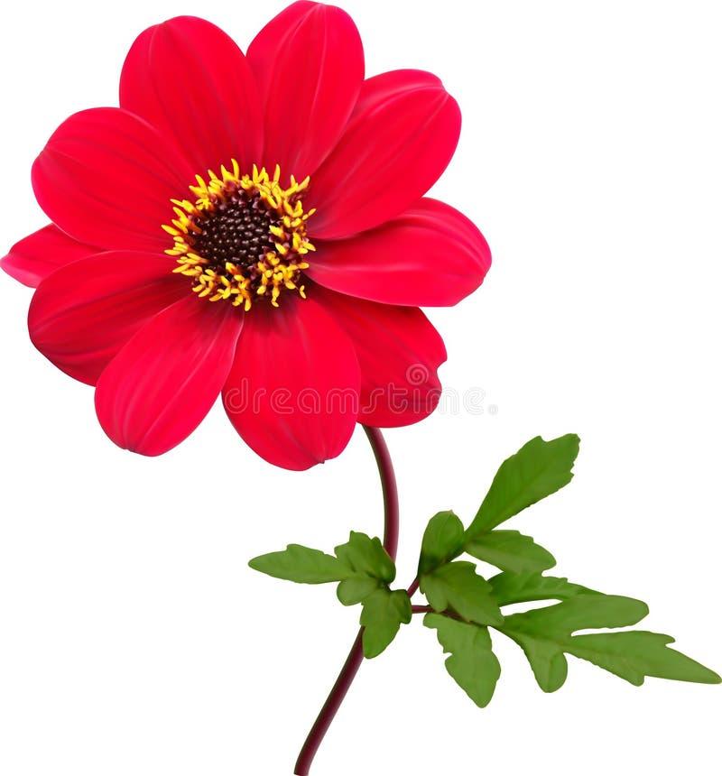 Κόκκινο λουλούδι νταλιών διανυσματική απεικόνιση