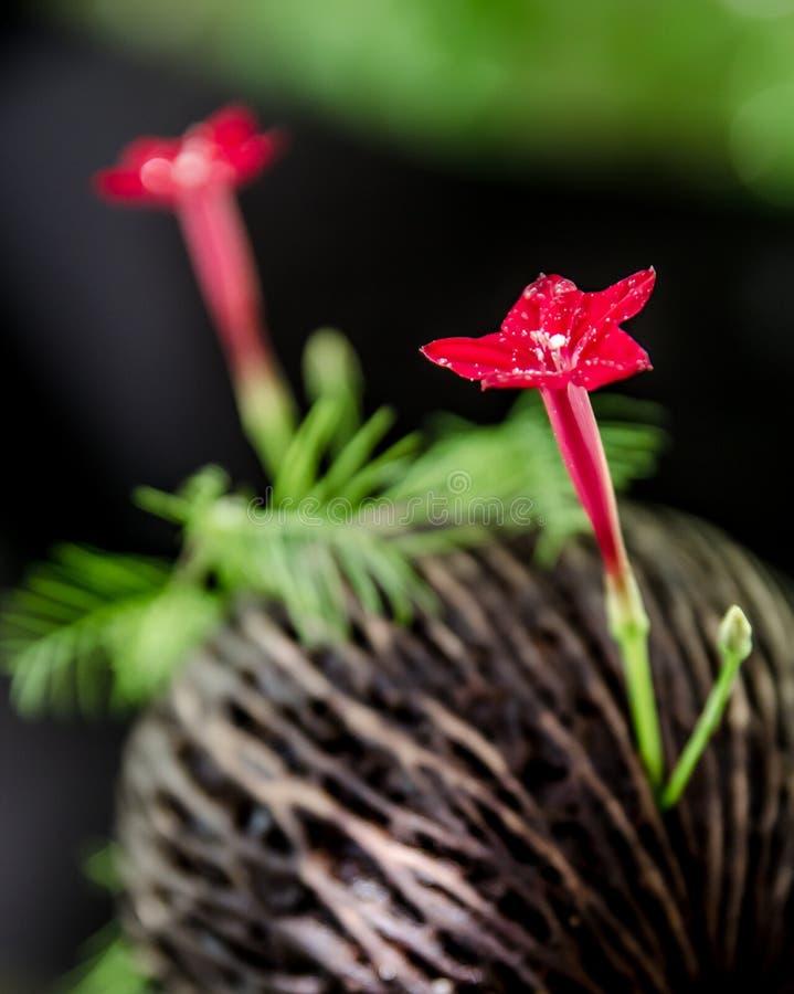Κόκκινο λουλούδι στοκ φωτογραφίες