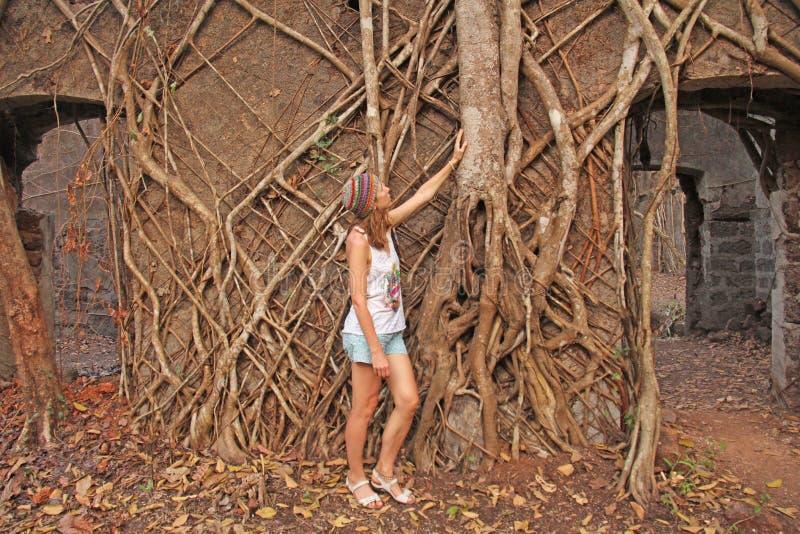 Κόκκινο οχυρό στην Ινδία, Goa Ρίζες και κορμοί του παλαιού συλλήφθείτυ δέντρα τ στοκ εικόνες με δικαίωμα ελεύθερης χρήσης