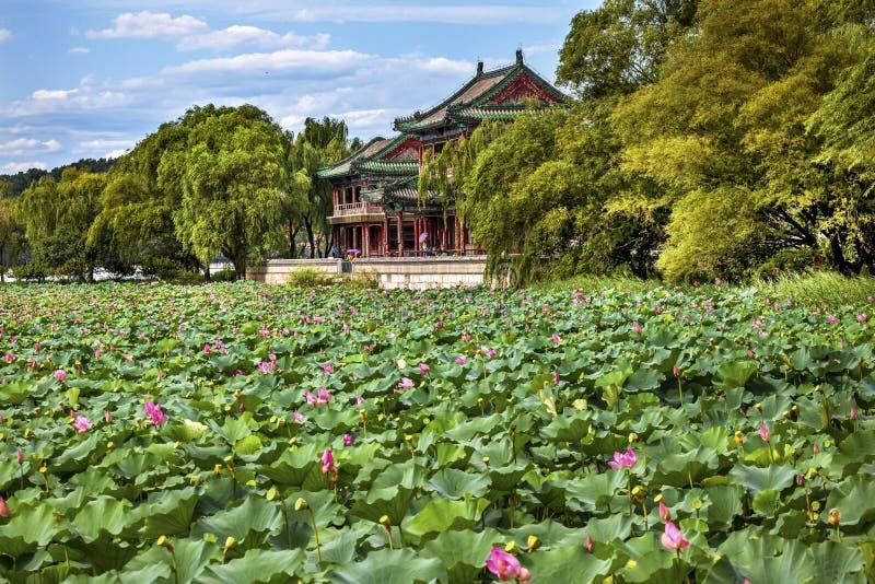 Κόκκινο πάρκο Πεκίνο Κίνα θερινών παλατιών κήπων Lotus περίπτερων στοκ φωτογραφία
