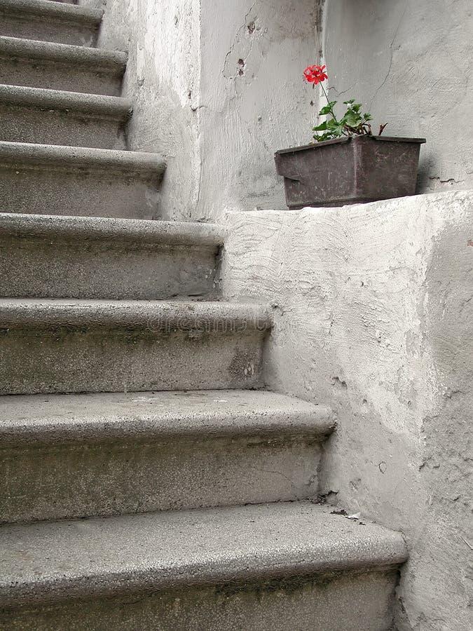 κόκκινο πέλμα λουλουδ&iot Στοκ Εικόνες