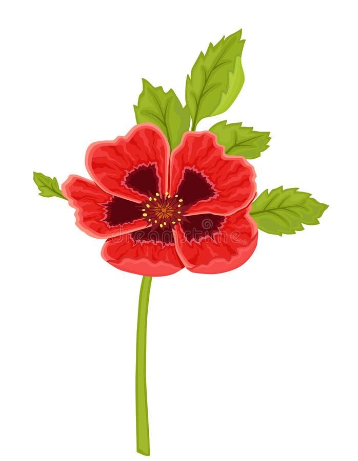 κόκκινο παπαρουνών λου&lambda διανυσματική απεικόνιση
