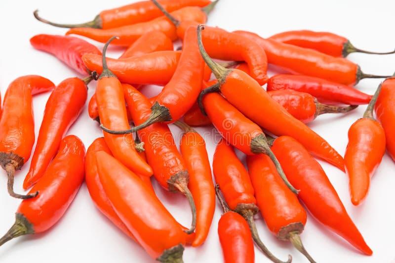 Κόκκινο πιπέρι τσίλι που απομονώνεται σε ένα άσπρο υπόβαθρο στοκ εικόνες