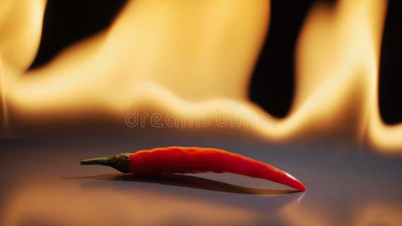 κόκκινο πιπεριών τσίλι Αιχμηρό κόκκινο πιπέρι ενάντια σε μια φλόγα Με την αντανάκλαση σε έναν καθρέφτη στοκ φωτογραφία με δικαίωμα ελεύθερης χρήσης