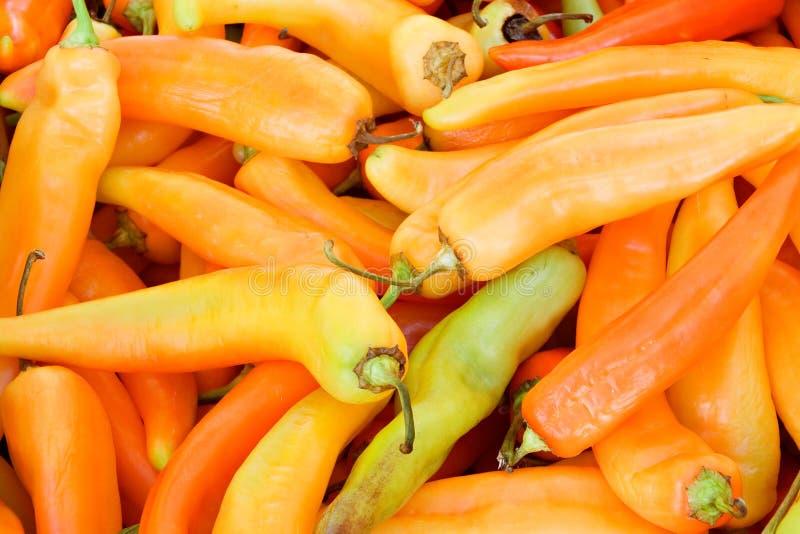 κόκκινο πιπεριών στοκ φωτογραφίες με δικαίωμα ελεύθερης χρήσης