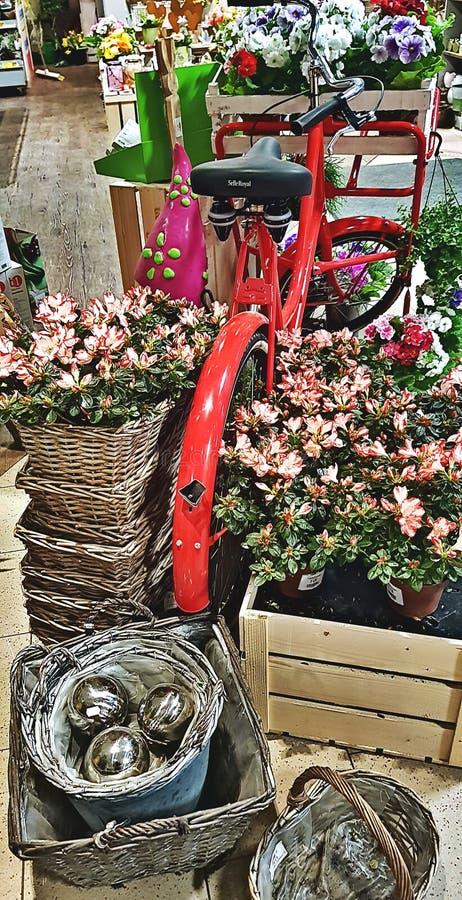 Κόκκινο ποδήλατο σε ένα ανθοπωλείο στοκ φωτογραφία